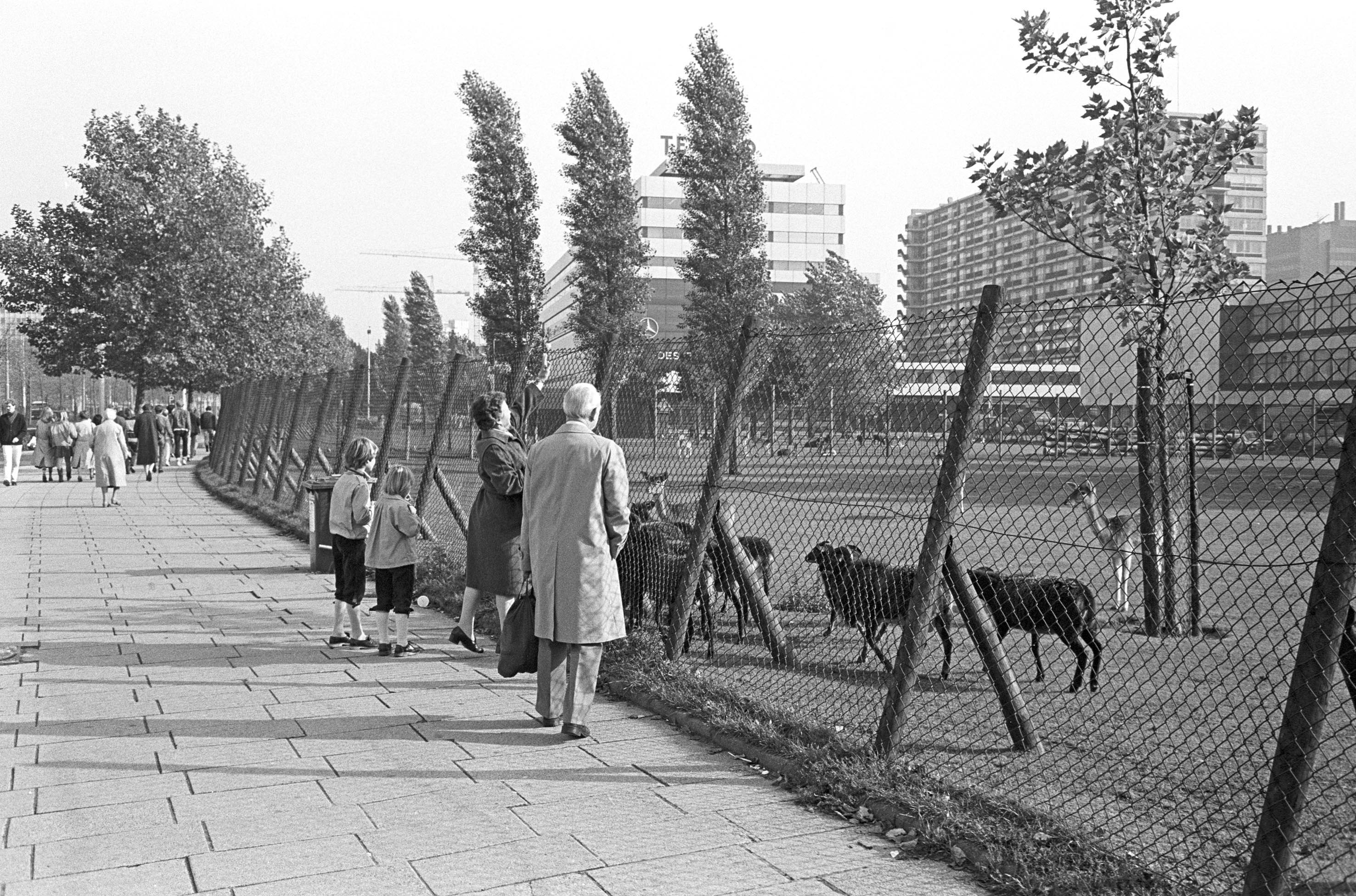 Hertenkamp aan het Weena in 1982
