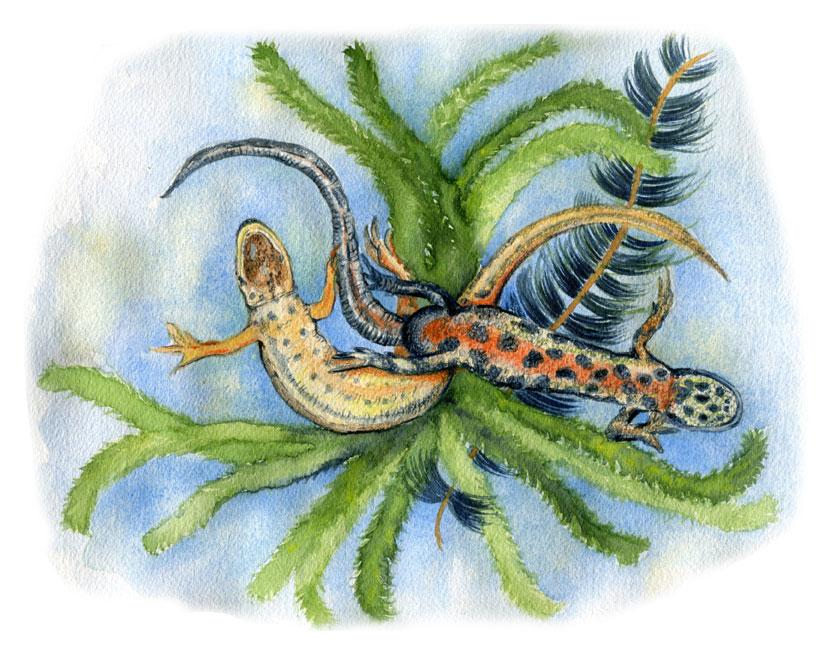 Vers Beton – Esther Lankhaar – salamanderklein